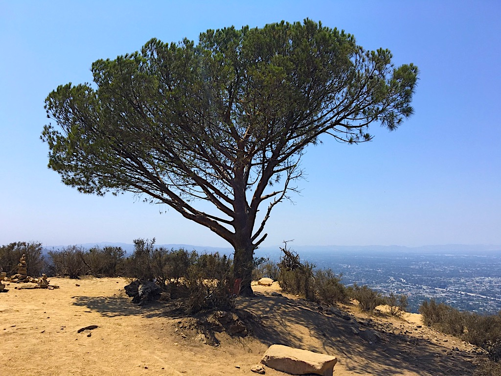Viewranger Griffith Old La Zoo Hollywood Sign Wisdom Tree